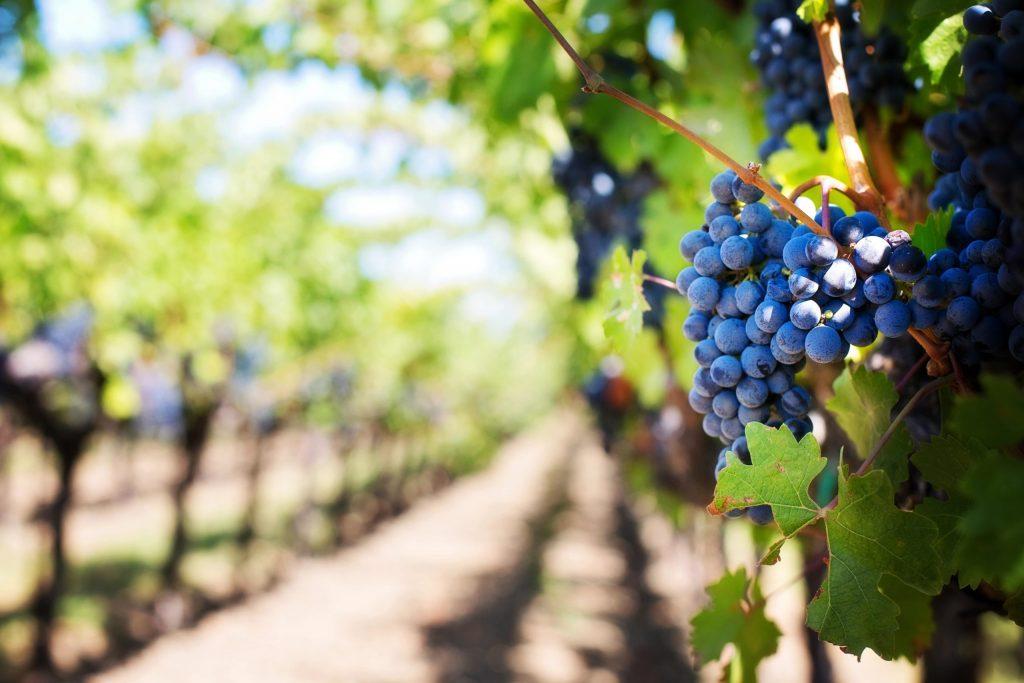 vin biodynamique lowine
